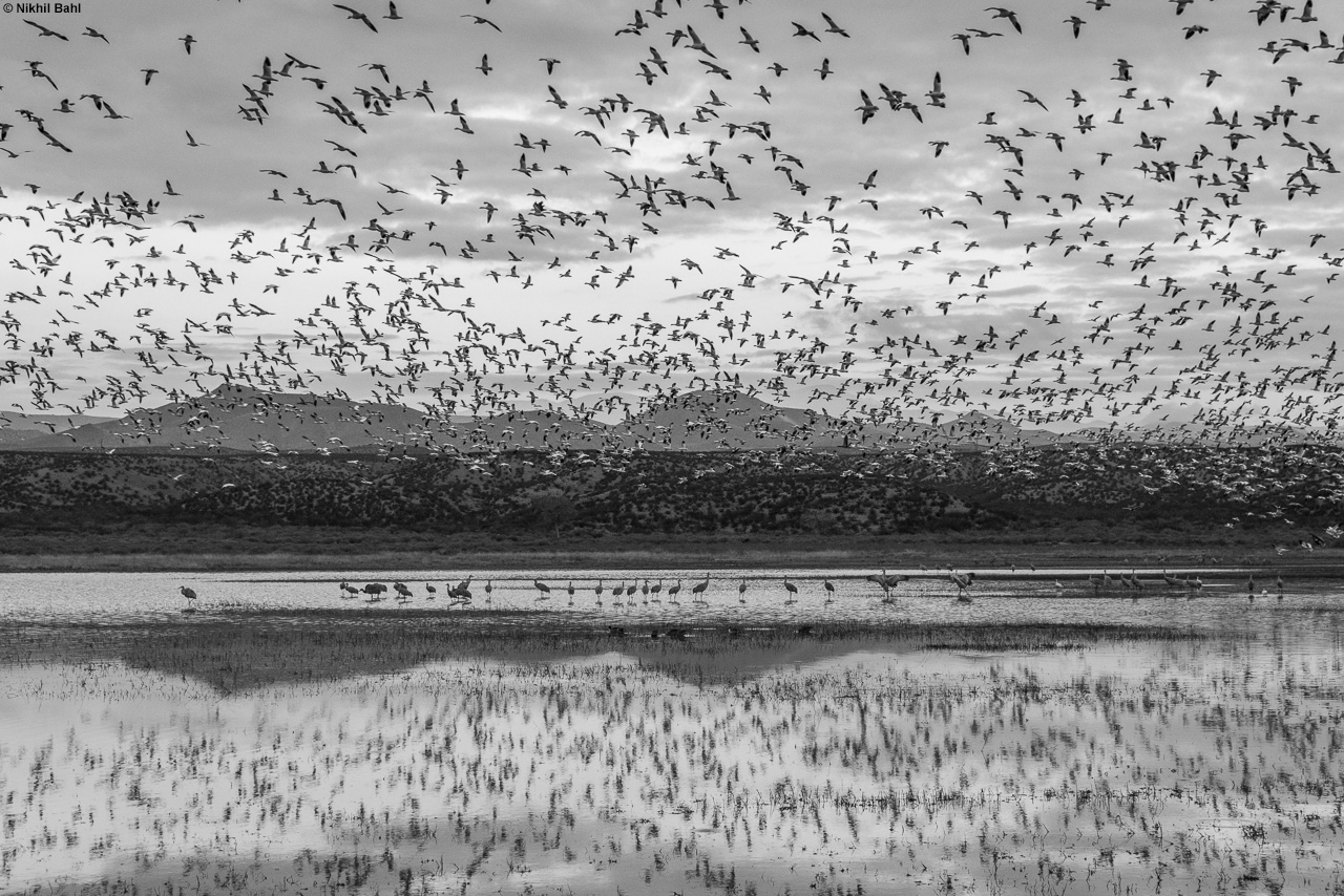 Bosque del Apache photography workshop © Nikhil Bahl