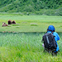 Photographer photographing bears from distance © Expeditions Alaska