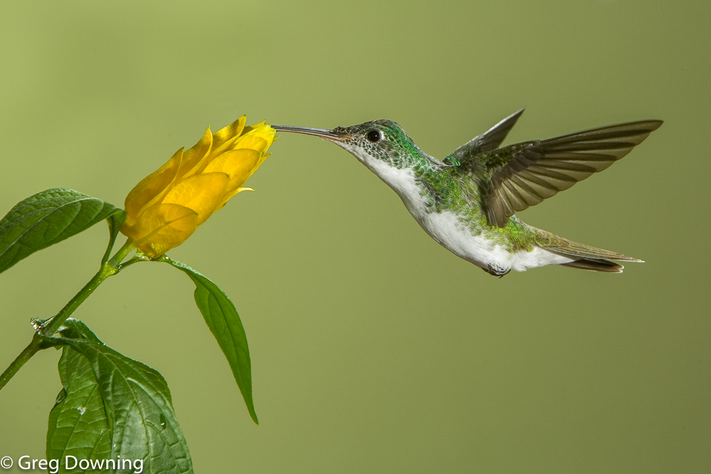 Andean emerald by Greg Downing