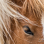 Close-up of horse © Nikhil Bahl