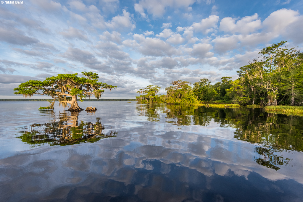 Blue Cypress Lake photography © Nikhil Bahl