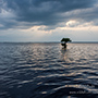 Blue Cypress Tree on water © Nikhil Bahl