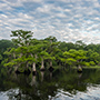 Blue Cypress Lake shoreline © Nikhil Bahl