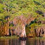 Blue Cypress Lake trees © Nikhil Bahl