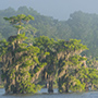 Cypress trees on lake © Nikhil Bahl