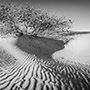 Tree and sand panorama © Nikhil Bahl