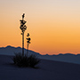Yucca silhouette sunset © Nikhil Bahl