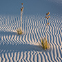 Yuccas with light shadows and patterns in the sand © Nikhil Bahl