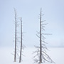 Trees in the fog at Yellowstone © Nikhil Bahl